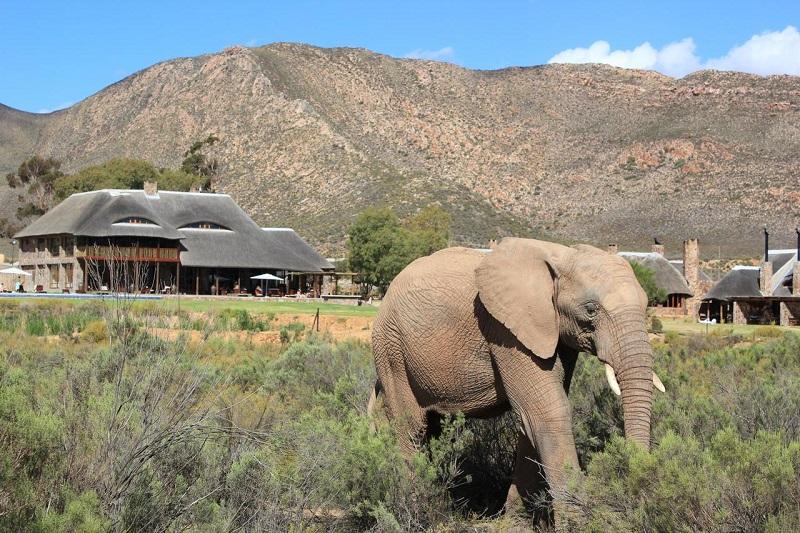 Pontos turísticos na Cidade do Cabo: Aquila Private Game Reserve