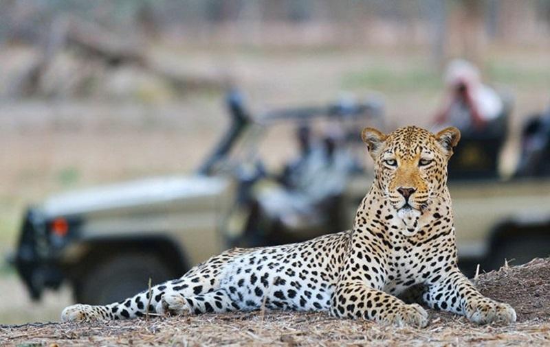 Animal em Inverdoorn na Cidade do Cabo