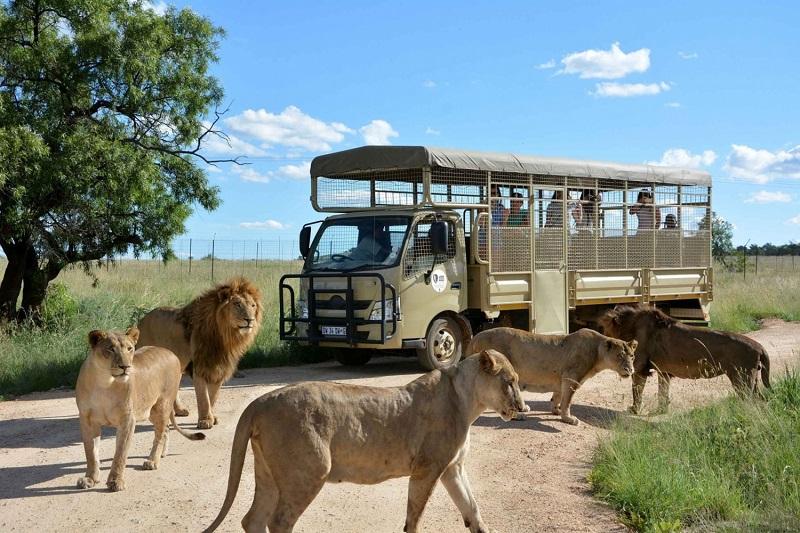 Excursão no Lion Safari Park