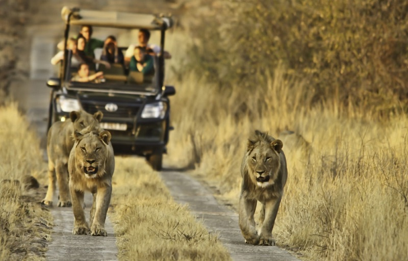 Ingressos mais baratos para atrações na África do Sul