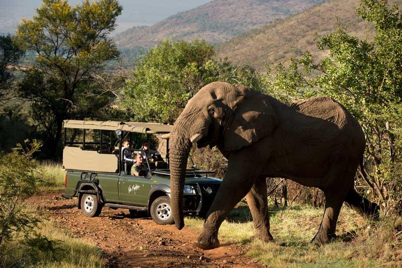 Pontos turísticos em Joanesburgo: Pilanesberg