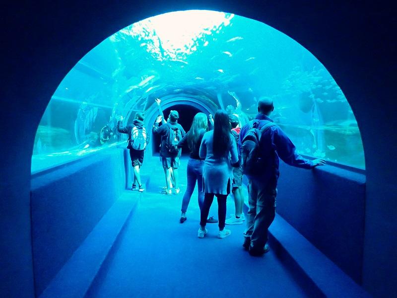 Pontos turísticos na Cidade do Cabo: Two Oceans Aquarium