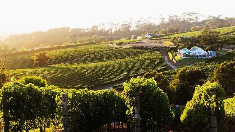 Tour nas vinícolas de Constantia