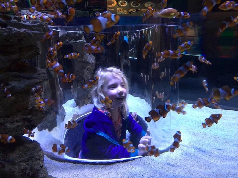 Menina vendo aquário Two Oceans Aquarium da Cidade do Cabo