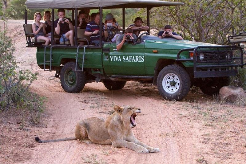Ir ao safári Kruger National Park em Joanesburgo