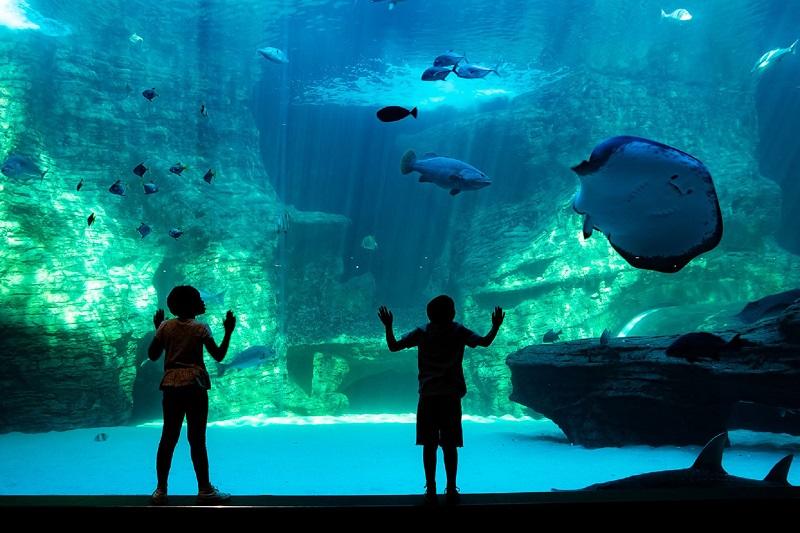 Passeio pelo Two Oceans Aquarium na Cidade do Cabo
