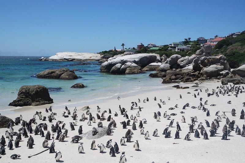 Boulders Beach na Cidade do Cabo