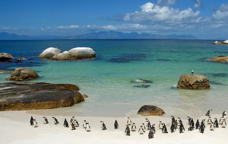 Melhores praias da Cidade do Cabo: Boulders Beach