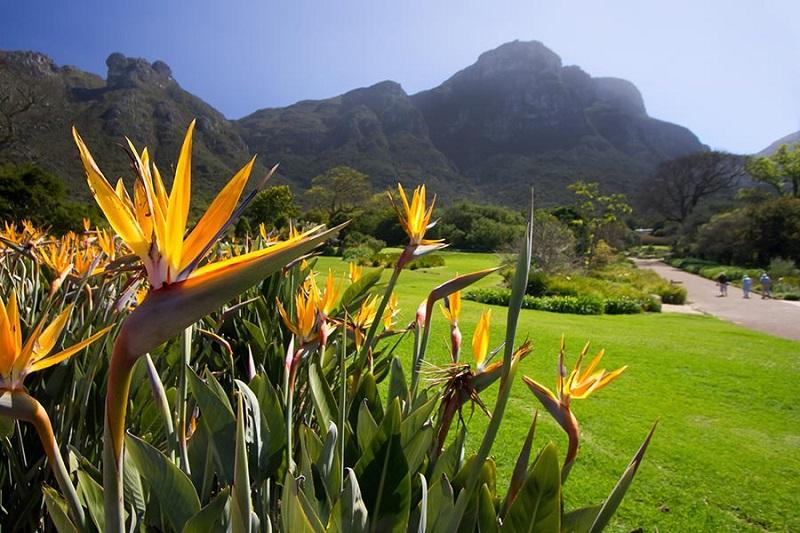 Diferenciais do Kirstenbosch National Botanical Garden na Cidade do Cabo