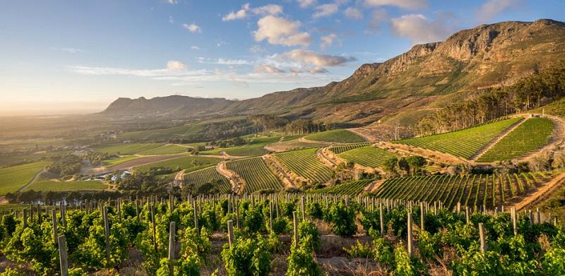Vinícolas de Constantia nas proximidades da Cidade do Cabo