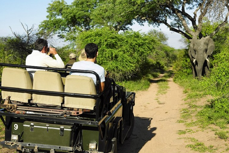 Passeio pelo Parque Nacional Kruger