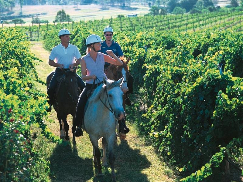 Passeio a cavalo em vinícola de Stellenbosch