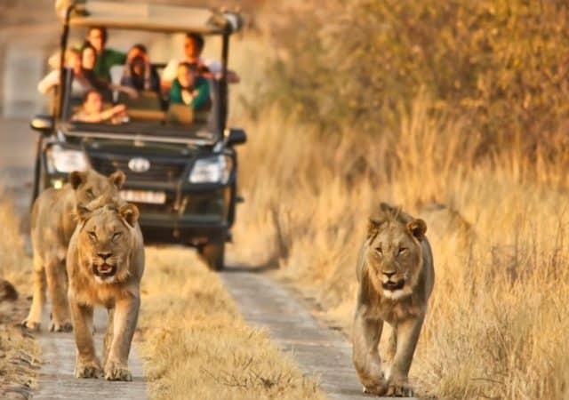 Pilanesberg National Park em Joanesburgo