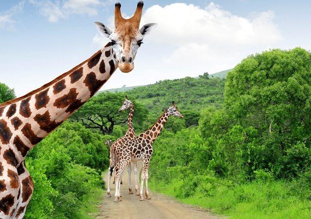 Pontos turísticos na África do Sul