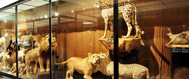 Exposição no Iziko South African Museum na Cidade do Cabo