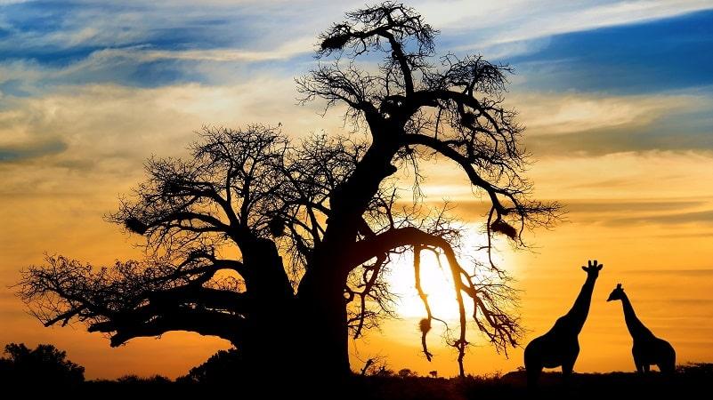 10 lugares imperdíveis para ir na África do Sul