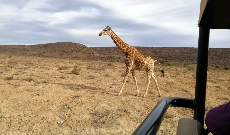 Sanbona Wildlife Reserve na Cidade do Cabo