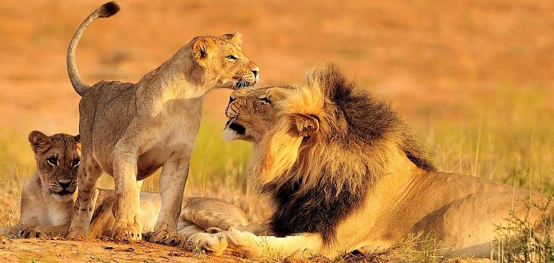 Animais no Kruger National Park - Joanesburgo