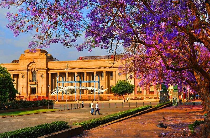 Museu de História Natural em Pretória