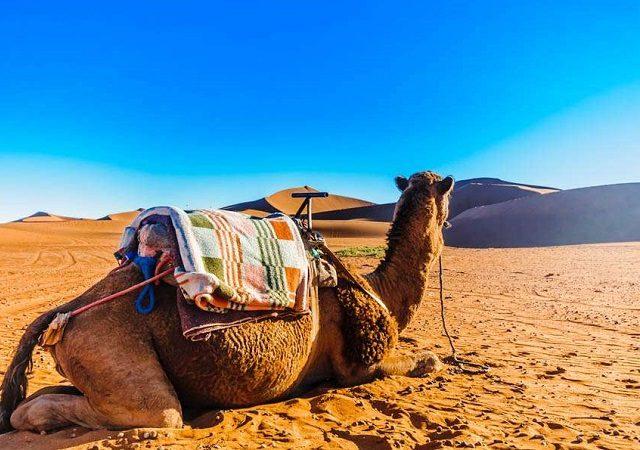 Ingressos mais baratos para TUDO no Marrocos